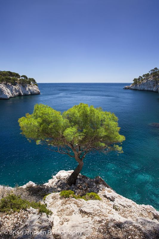 Lone pine tree in the Calanques near Cassis, Provence France. © Brian Jannsen Photography