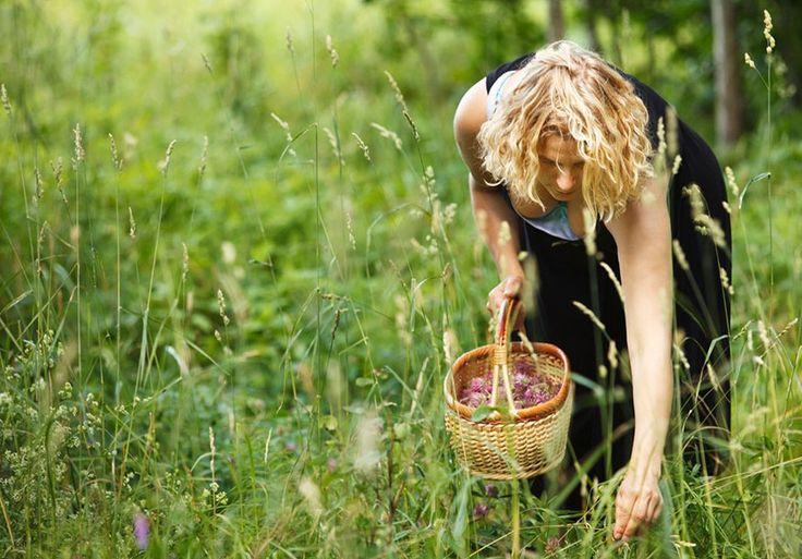 Prova skogens apotek – 4 naturliga kurer mot vanliga krämpor | LAND.se