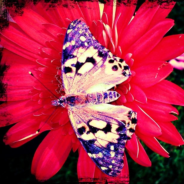 36 best images about All things Purple and Red! on ...