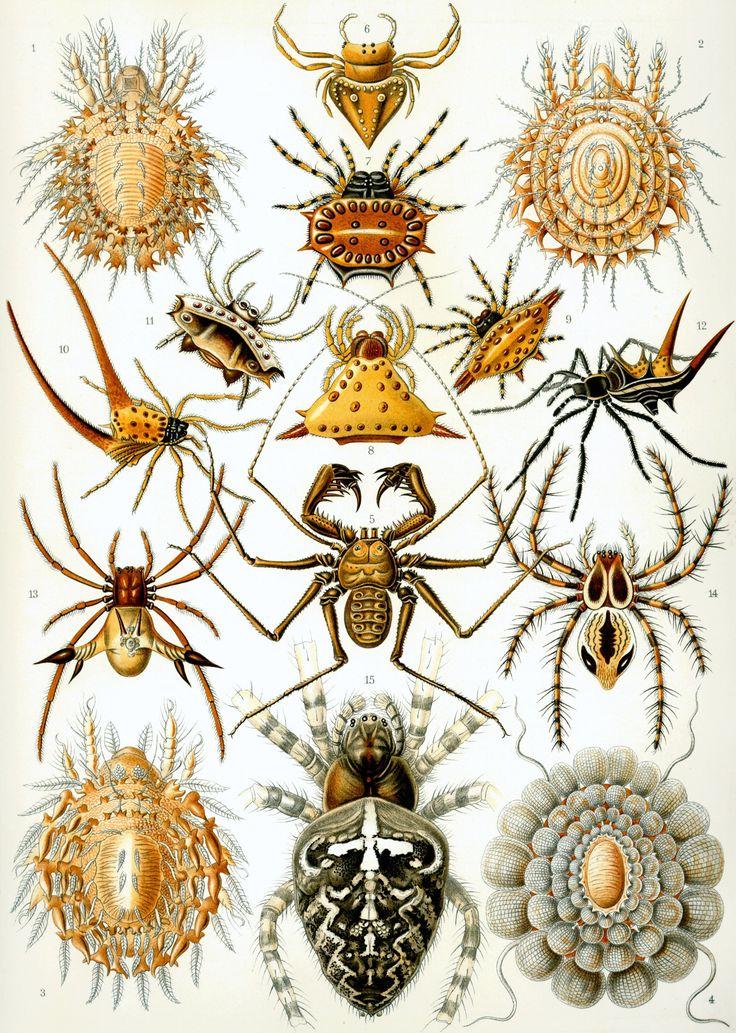 arachnids spiders - Google Search