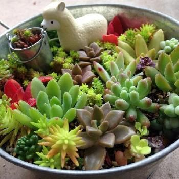 春を彩る多肉植物寄せ植えフォトコンテスト|[GreenSnap]観葉植物や花の名前、ガーデニング雑貨のおすすめが見つかる!