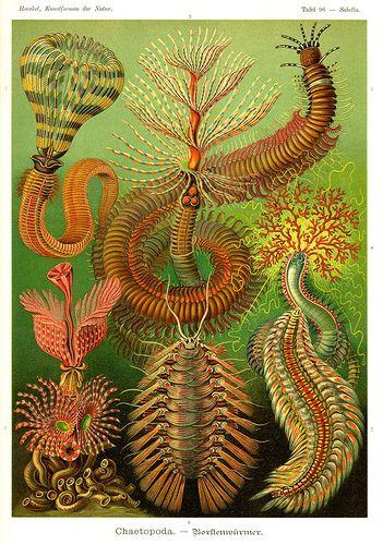 Интересное и забытое - быт и курьезы прошлых эпох. - Ernst Haeckel 1834 - 1919. Kunstformen der Natur