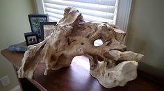 How to Prepare Driftwood for Aquarium or Terrarium Use | eBay