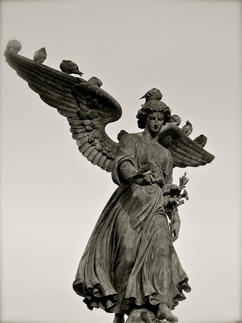 best angel statues images angel statues angels the famous stone angel of the bethesda fountain in central park nyc being perched on by pigeons