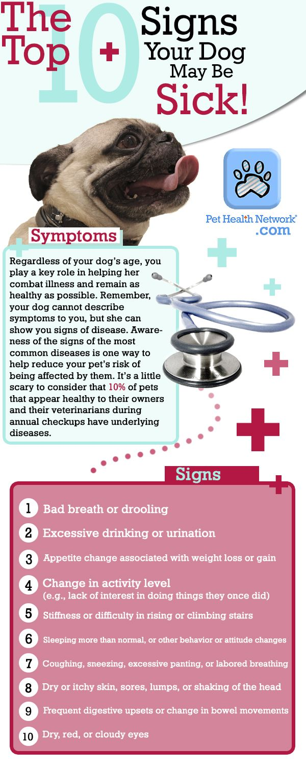 Top 10 Signs Your Dog May Be SICK! www.pethealthnetwork.com