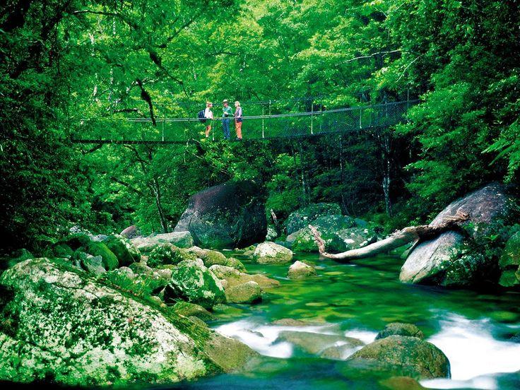 Daintree Rainforest, Cairns, Australia