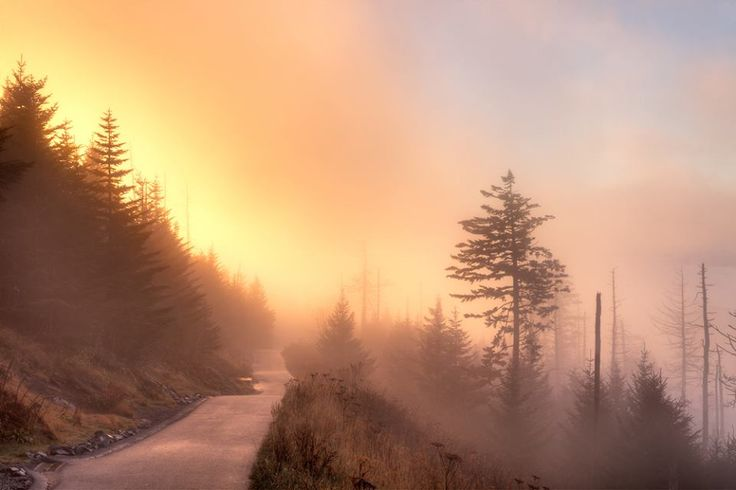 Are you ready to see a Smoky Mountain sunrise? Here's one you might find on the way to Clingman's Dome!