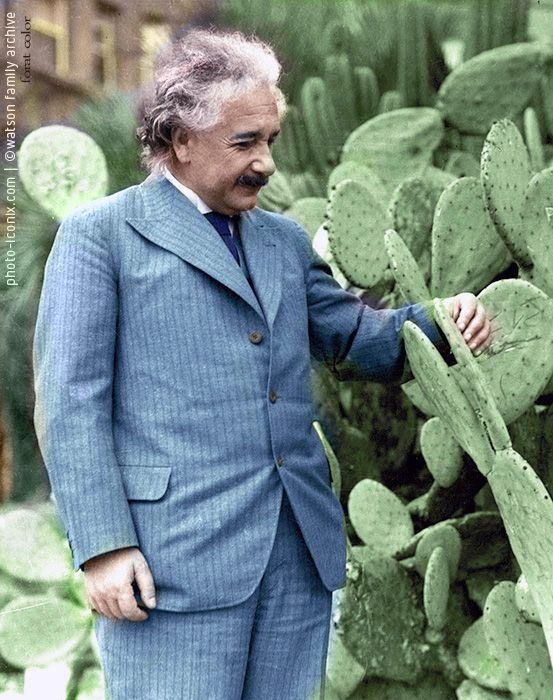 Einstein loves cactus