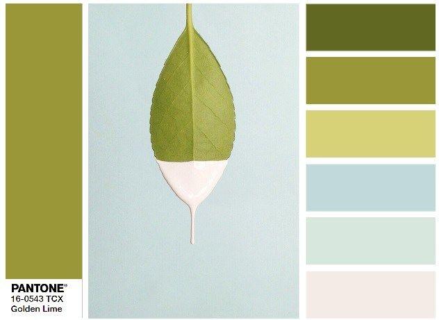 PANTONE 16-0543 Golden Lime - color combination