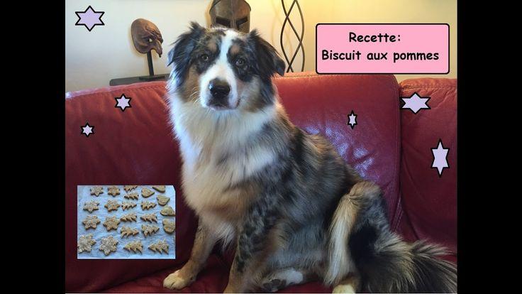 recette biscuit aux pommes pour chien
