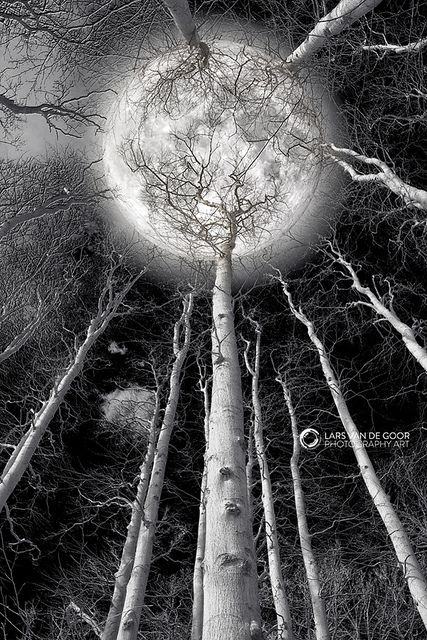 ~~Holding the Moon by Lars van de Goor~~