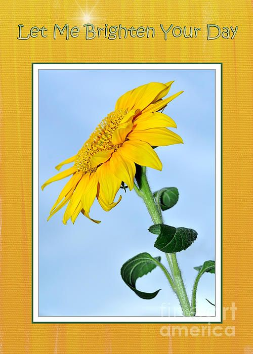 LET ME #BRIGHTEN YOUR #DAY - #Sunflower  Greeting Cards and Prints at: http://kaye-menner.artistwebsites.com/featured/let-me-brighten-your-day-kaye-menner.html  -