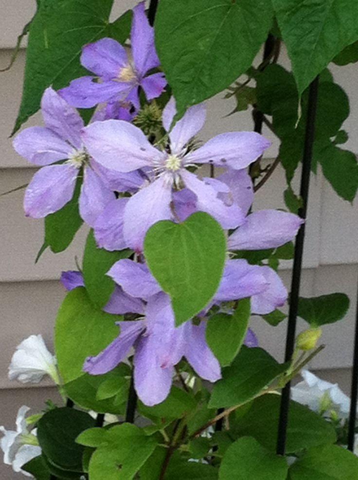 512 best images about garden on pinterest geranium. Black Bedroom Furniture Sets. Home Design Ideas