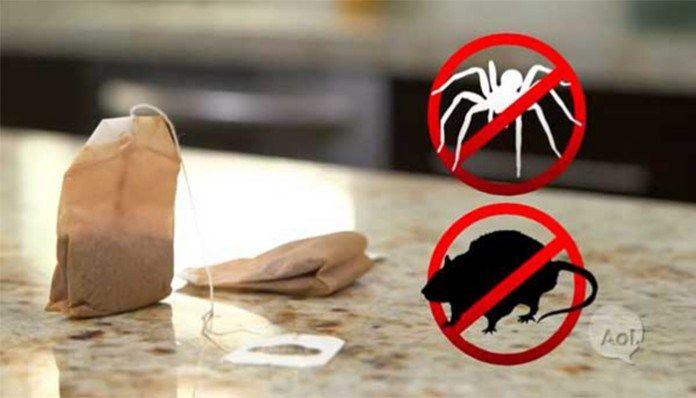 Myši a pavouci v domě: od této chvíle se pro vás stanou minulostí