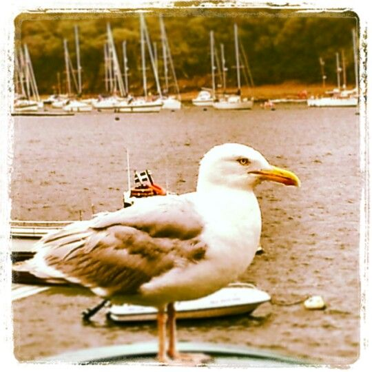 A moments thought at Fowey Harbour