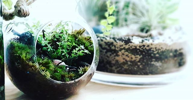 Moss and fern are growing well in the cold weather #terrarium