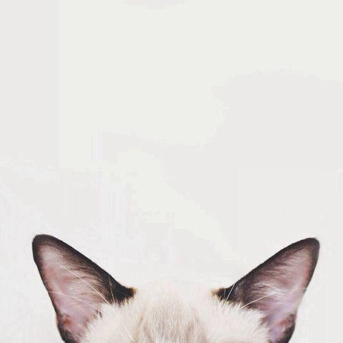 M. Cat