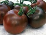 Heirloom Tomato Plants for Sale! $2.50 per plant. Coeur d'Alene, Idaho. 18 varieties: standard, cherry and paste types.