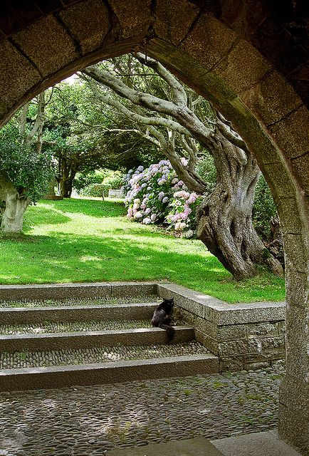St Michael's Mount Gardens, Cornwall, England | View of gnarled tree through arch near garden entrance