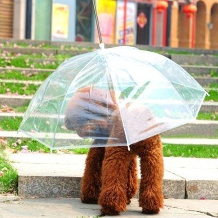 A dog umbrella leash that you'll love using because it will keep your dog dry when you have to take it for a walk.