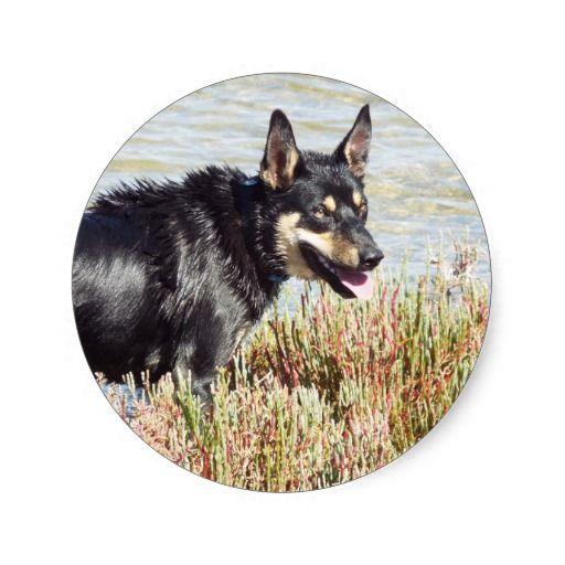 Swamp Dog Round Stickers