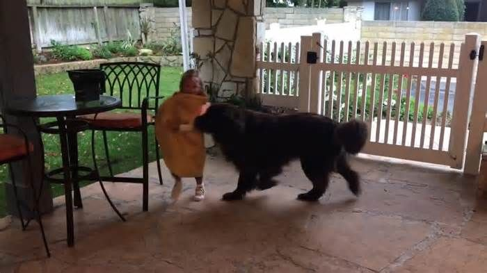 Hungry dog chases delicious