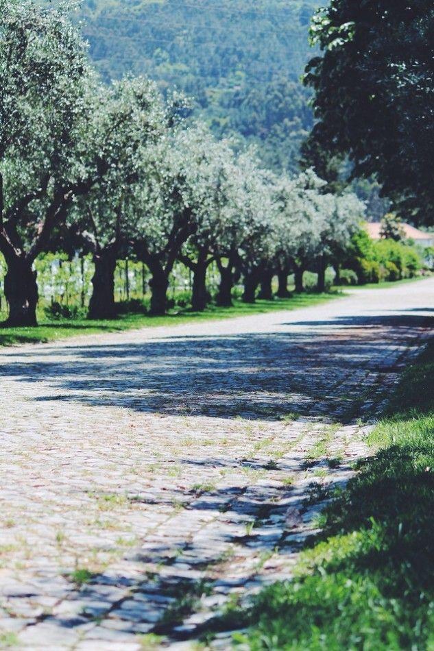 É nos vários hectares da Quinta do Meiral, na Lousã, que crescem algumas das plantas aromáticas responsáveis pelo sabor mítico d'O Licor de Portugal.