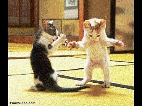 Video Cats and dogs videos  ● Funny ● Dance  ●Fight Videos