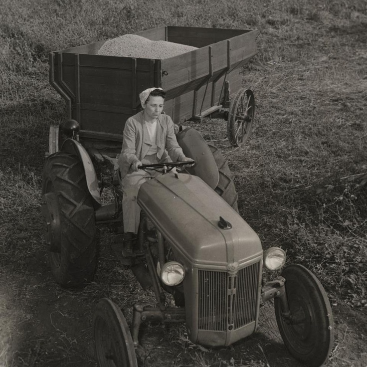 Mid 1940's Ford tractor