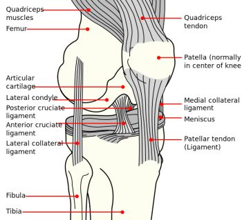 Anterior Cruciate Ligament (ACL) Rehabilitation - Physiopedia, universal access to physiotherapy knowledge.