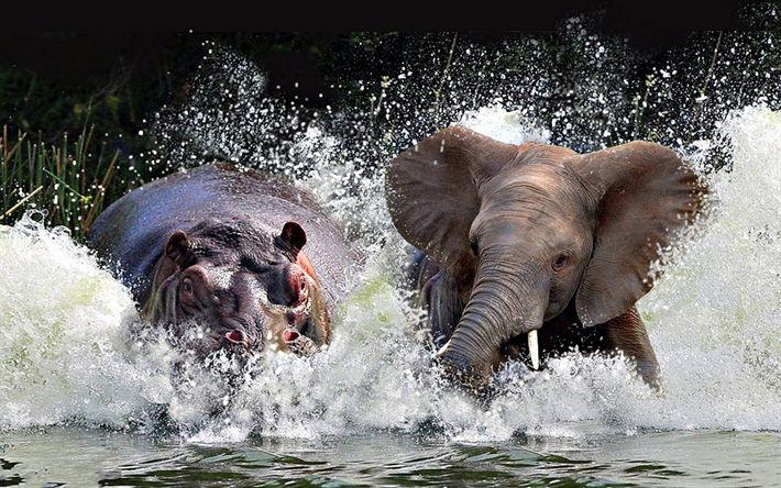 Download wallpapers behemoth, elephant, wildlife, lake, wild animals, hippopotamus