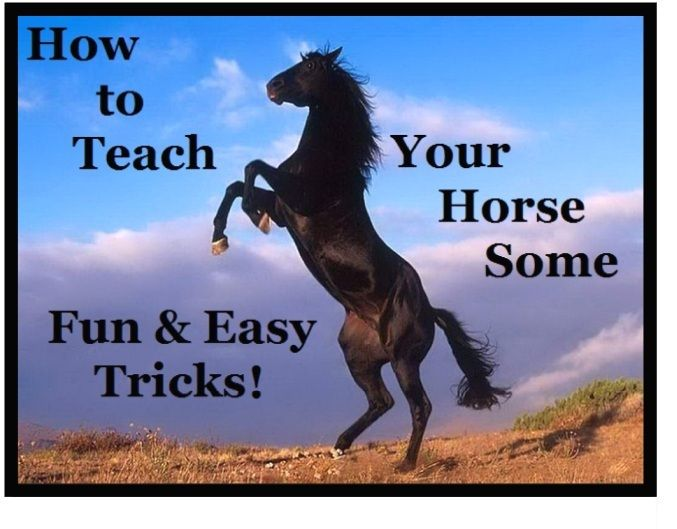 Easy Tricks to Teach Your Horse
