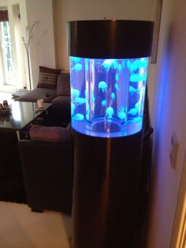 266 best fish tanks images on pinterest aquarium ideas for Jelly fish aquarium
