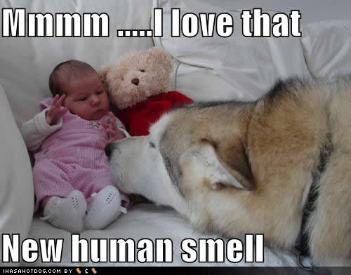 New Human Smell
