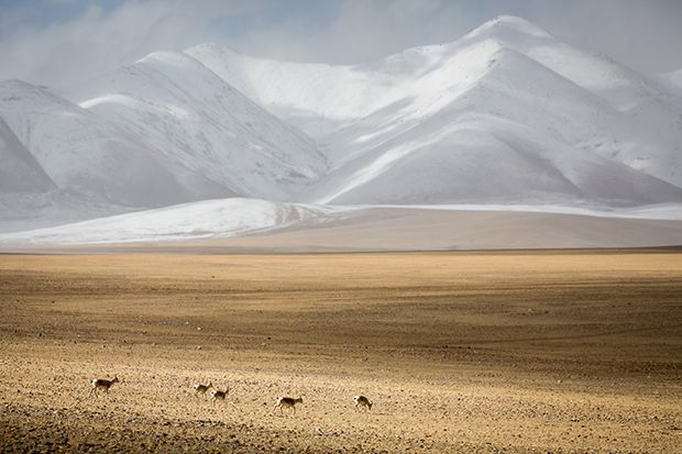 30 Photos from The Print Swap to Be Exhibited at MOPLA - Feature Shoot  ||  'Wild Donkeys of Tibet' © Bastian Barenbrock (@bastian_barenbrock), Cologne, Germany 'Ann Arbor, Michigan 1974' © Don Hudson (@donhudson1229), South Lyon, MI 'Show Me Slowly What I Only Know The Limits Of' © Andrea Lambe (@insomniandrea), Dublin, Ireland The Print Swap, a worldwide initiative by Feature Shoot, is heading to the Month of Photography…