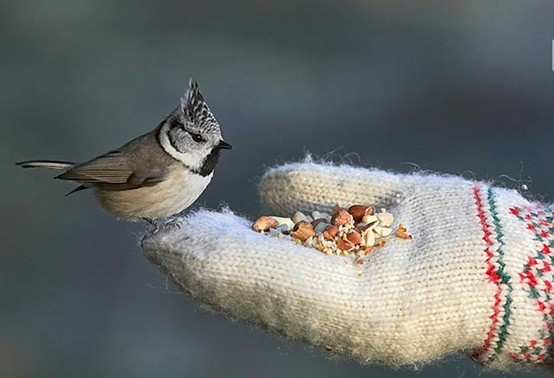 Inspiring - We do this with hummingbirds.