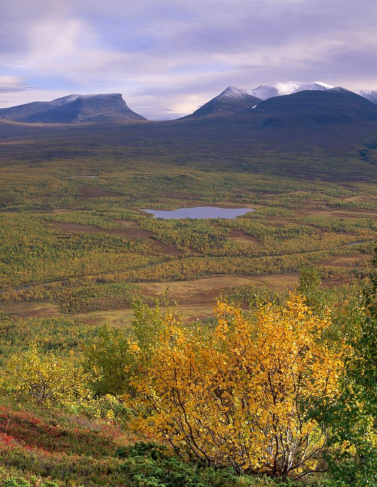 Abisko National Park, Norrbottens Län, Sweden  is a place of many delights, including a birch-clad valley, flowery alpine meadows and dazzling river rapids. The park is surrounded on three sides by lofty mountains and, in the north, by Scandinavia's largest alpine lake, Torneträsk. Abisko is easily accessible and has long been a popular starting point for hikes in the mountain of Lapland.