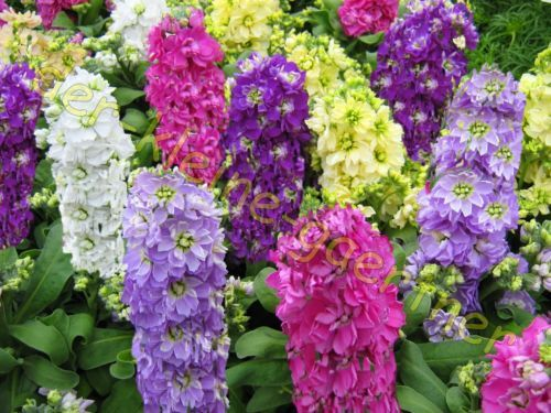 8 best Blumen images on Pinterest