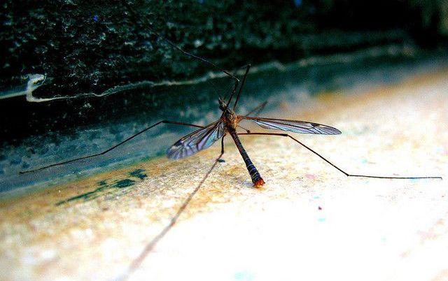 Как избавиться от комаров народными средствами