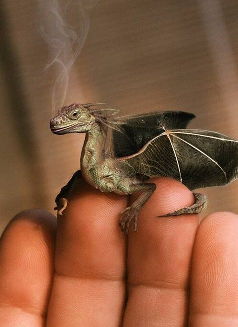 I know I'm a GEEK! But I want a baby dragon!