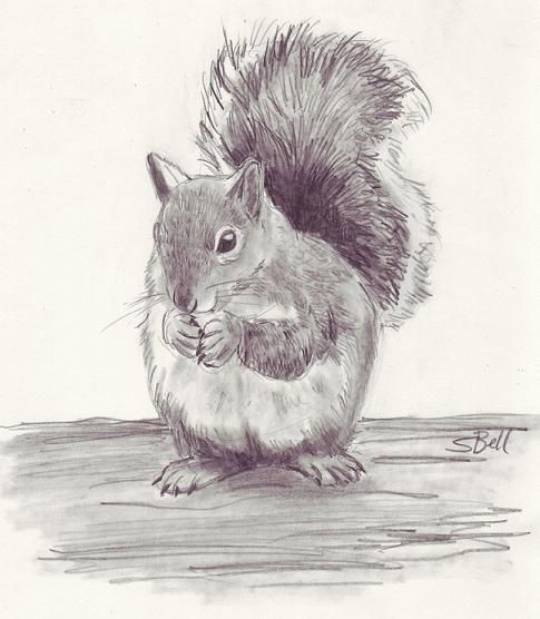 I love drawing animals, especially the furry ones. If you want to draw a furry animal, try sketching the squirrel below. What You'll Need: 2B Pencil Tortillons (for blending) Bristol Paper – (This paper holds up very well to the blending technique we'll be using) Erasers, including a Kneaded Eraser   How To Start: When […]