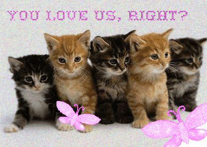 Risultati immagini per sweet kittens love