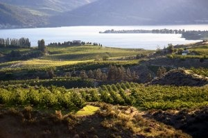 Columbia Valley Vineyards. Washington State