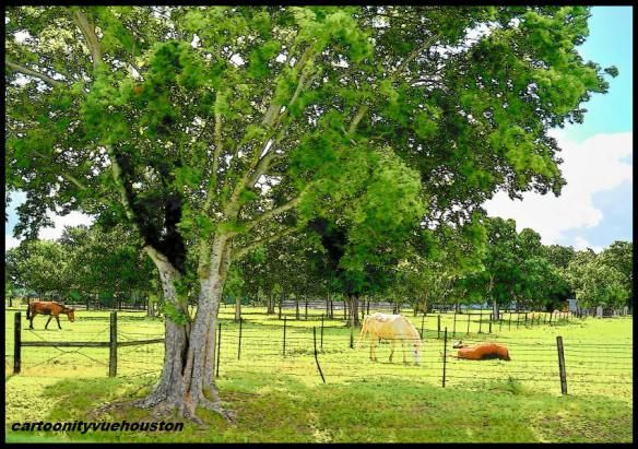 Horse Pasture in Stafford, Texas