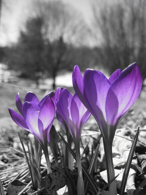 Spring has sprung in purple