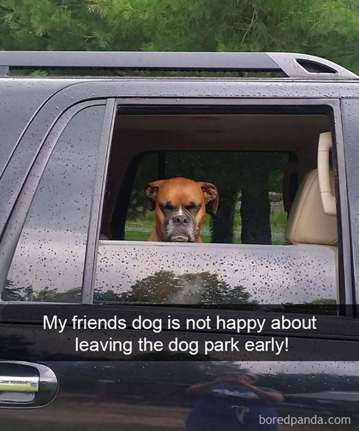 Dog Pictures Meme Dump Of The Day - 10