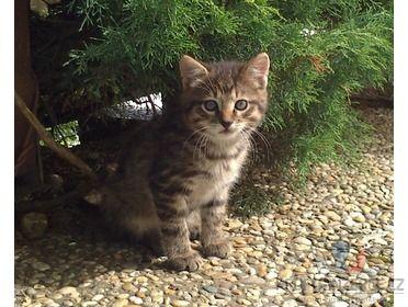 Hledá se domov pro koťátka [7u.jpg]