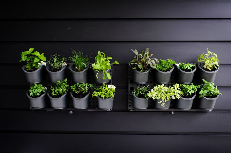 Vertical herb garden upping the style with black boards.