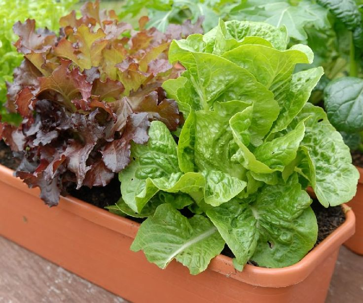 364 Best Images About Container Vegetable Gardens On