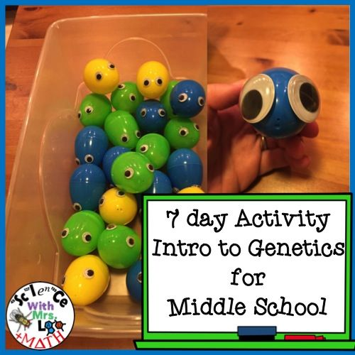Middle School Genetics with Easter Eggs with Googly Eyes and Pipe Cleaner Chromosomes! 7 day lesson plan with detailed student and teacher instructions.